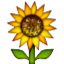Lively Yellow Sunflower Smiley Face, Emoticon